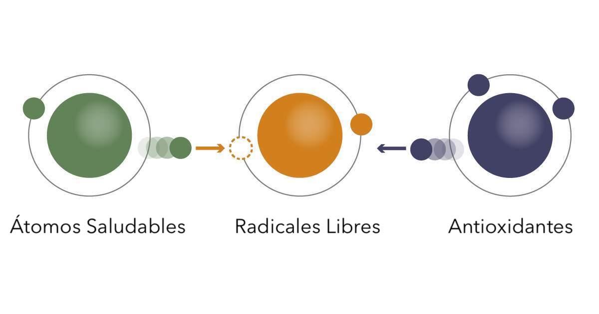 Infográfico de antioxidantes