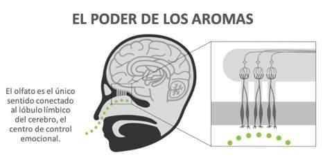 Infográfico el Poder del Aroma