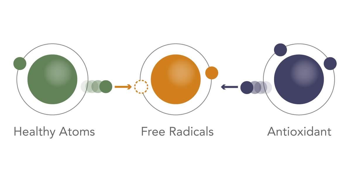 antioxidants infographic