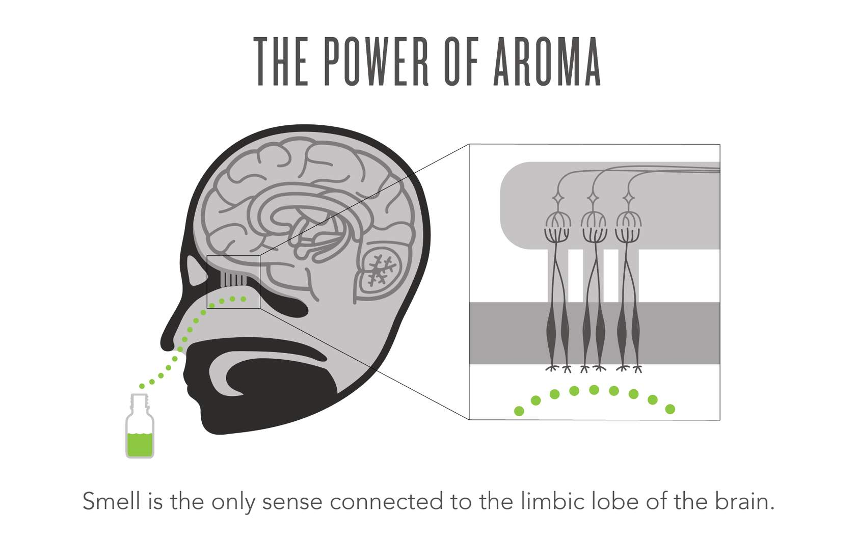 power of aroma infographic