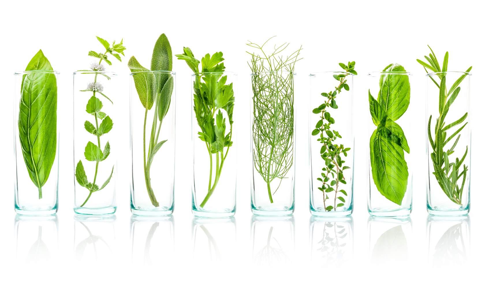 plants in glasses