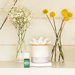 Ceramic Succulent Diffuser Collection White Amp Lavender