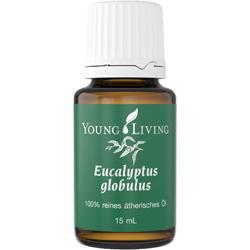 Eukalyptus Globulus Öl
