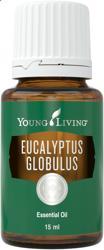 藍膠尤加利精油 Eucalyptus Globulus