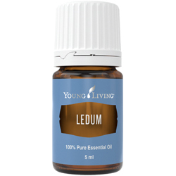 Ledum Essential Oil