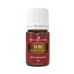 Tea Tree (Melaleuca Alternifolia) - 5ml