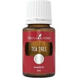 Tea Tree Essential Oil | Essential Oil & Aromatherapy | Young Living Essential Oils