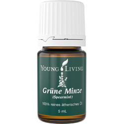 Spearmint Grüne Minze