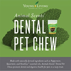Folleto, Pet Chew - Animal Scents - 25 uds.